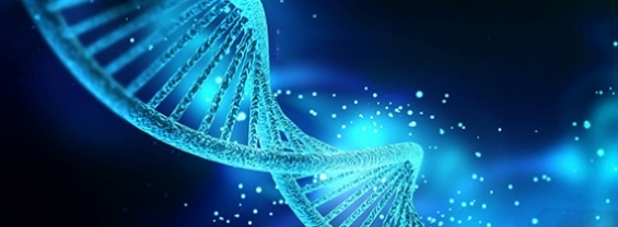 Sezione del DNA in 3D