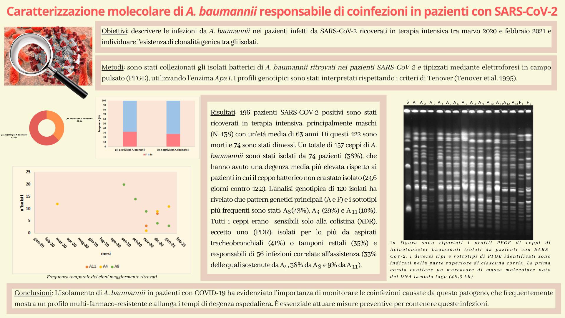 Caratterizzazione molecolare di A. baumannii responsabile di coinfezioni in pazienti con SARS-CoV-2