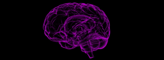 Riunione del gruppo italiano di Neuropatologia (Ginp)