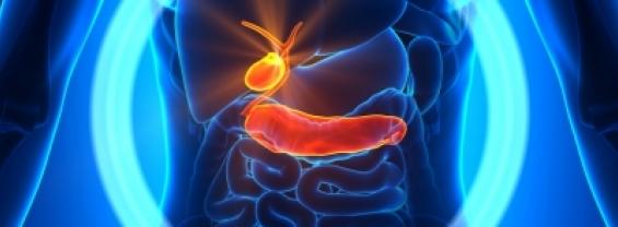 Un nuovo approccio farmacologico per ridurre la progressione del tumore pancreatico