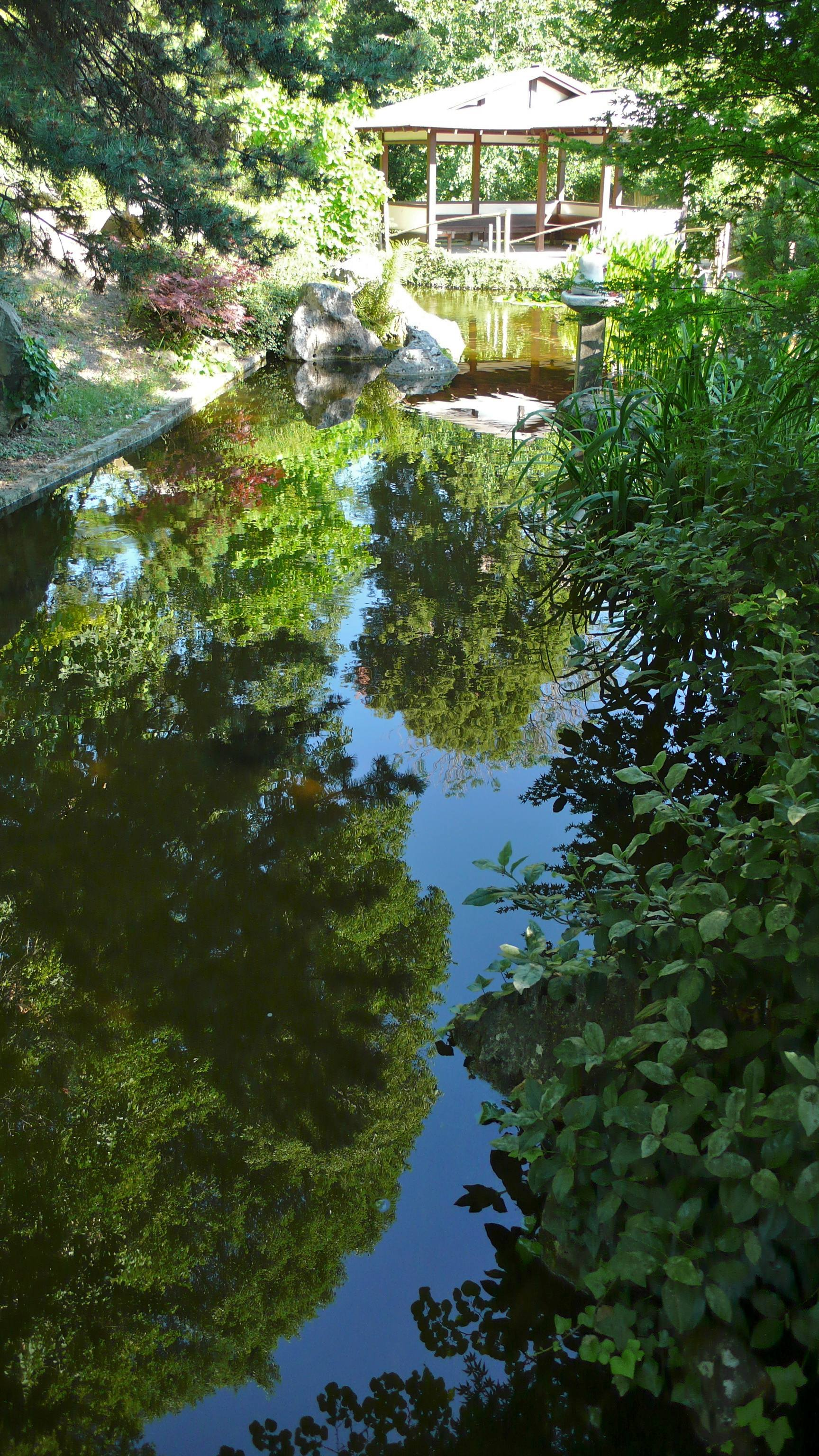 Giardino giapponese in estate sapienza universit di roma for O giardino di pulcinella roma
