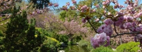 Giardino Giapponese Orto Botanico di Roma