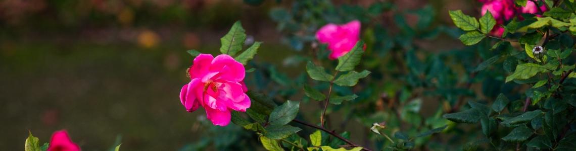 UN GIRO DEL MONDO ATTRAVERSO LE FIORITURE - 1 e 2 maggio Orto botanico